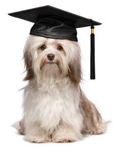 doggie graduate